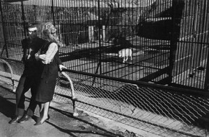Garry Winnogrand, Couple at Zoo